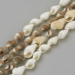 perles de coquillage mer des rives, couleur mélangée, 8~18x5~10x5~10 mm; sur 109 pcs / brin, 48(X-SSHEL-R043-05)