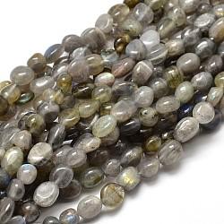 """Pépites de labradorite naturelle perles brins, 5~10x6~7x3~7mm, trou: 1 mm; environ 14.9""""~15.7""""(G-J335-40)"""