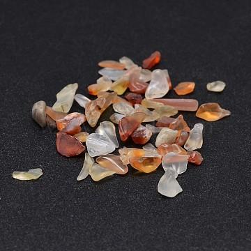 Природные сердолика бусы чип, нет отверстий / незавершенного, окрашенная и подогревом, 2~8x2~4 мм; около 170 шт / 10 г(X-G-O103-18)