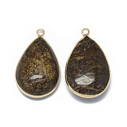 pendentifs en bronzite naturelle, avec les résultats en laiton, déposer, 35x21x9.5~10 mm, trou: 2 mm(G-E526-15A)