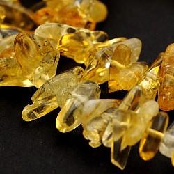 """Класс естественный цитрин бисера пряди, чипсы, 10~26x3~10x2~10 мм, отверстия: 1 mm; о 15.7""""(G-J279-15)"""