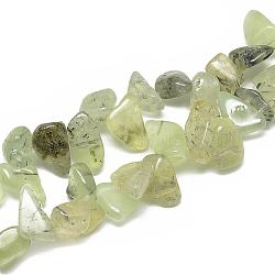 Chapelets de perles en préhnite naturelle, puce, 8~23x8~14x4~7mm, trou: 1mm; environ 55~70 pcs/chapelet, 16.4''(G-S316-22)