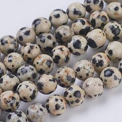 """Chapelets de perles en jaspe de dalmation naturelle, rond, 6mm, trou: 1mm; environ 29 pcs/chapelet, 7.6""""(G-G515-6mm-06)"""