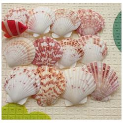 Beautiful Beach Sea Shells, Shells Crafts, for Aquarium Fish Tank Decor, Mixed Color, 40~80mm(X-DIY-WH0044-01)