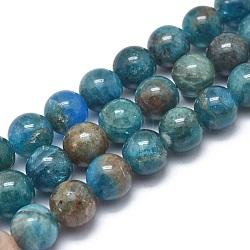 """Chapelets de perles en apatite naturelle, grade AB, rond, 8mm, trou: 1mm; environ 49 pcs/chapelet, 14.9"""" (38 cm)(G-I254-08C)"""