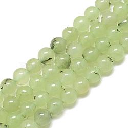Chapelets de perles en préhnite naturelle, teint, rond, 8~8.5mm, trou: 1mm; environ 50 pcs/chapelet, 15.7''(G-S300-118-8mm)