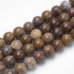 """Perles de bois naturel pétrifié (importé d'Amérique), rond, 6~6.5mm, trou: 1mm; environ 63 pcs/chapelet, 15.5""""(G-Q462-136-6mm)"""