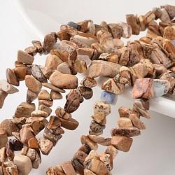 """Nuggets images naturelles jaspe brins de perles, 4~6x8~12x2~4mm, trou: 1 mm; environ 34.6""""(G-M344-26)"""