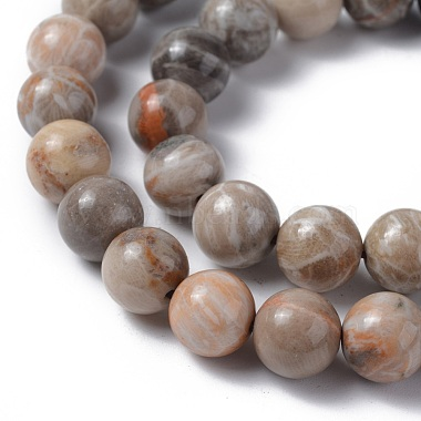 Natural Fossil Coral Beads Strands(G-G212-10mm-31)-3