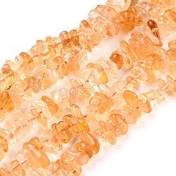Природный цитрин бисер нитей, чип, 6.5~14x5~10 mm, отверстия: 0.8 mm, 16 (40.5 см)(X-G-F666-03)