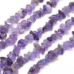 Améthyste naturelle brins puce de perles, teinte, 5~8x5~8mm, trou: 1 mm; environ 31.5 pouces